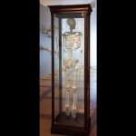 Squelette - 2011